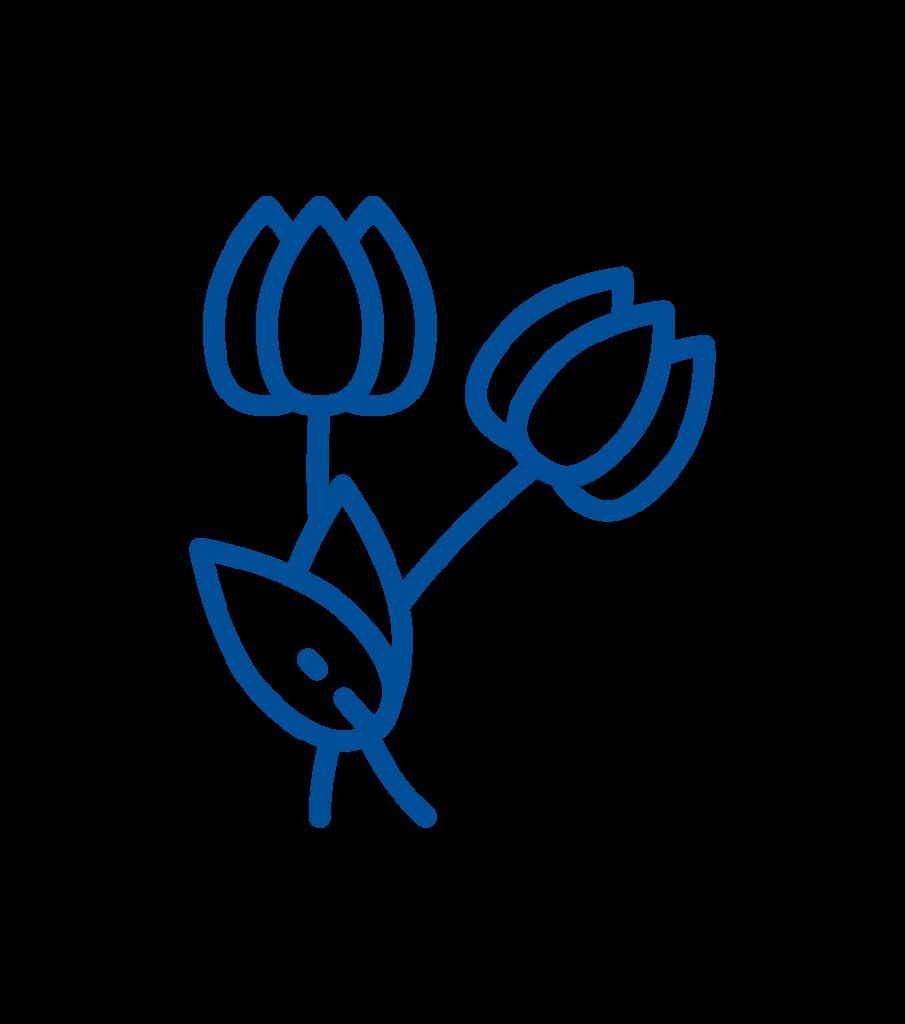 Flores entierros en sanabria